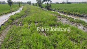 Miris, Jalan Poros Turipinggir Jombang Bak Pematang Sawah