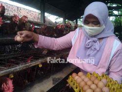 Harga Telur Turun Tapi Pakan Naik, Peternak Ayam Petelur di Jombang Mengeluh