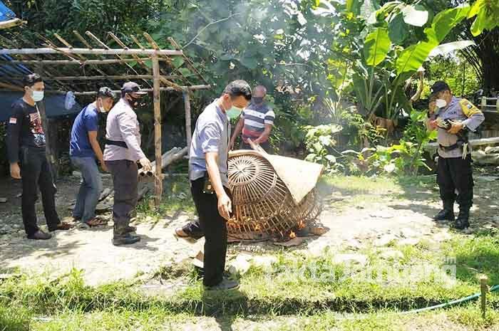 judi sabung ayam sumberjo plandaan jombang