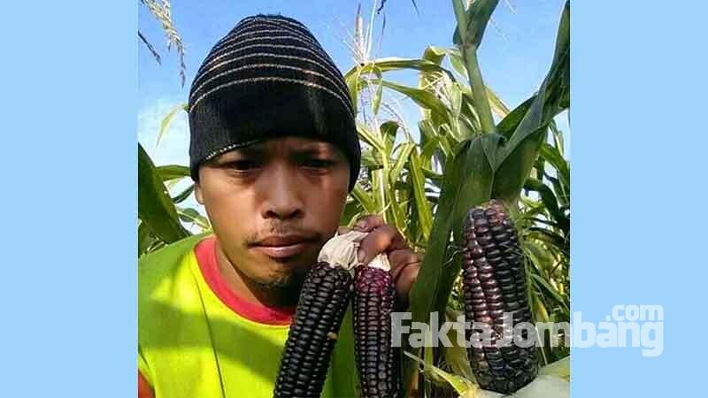 petani asal bangsri plandaan jombang