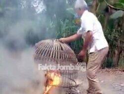 Picu Kerumunan, Arena Judi Sabung Ayam di Gedongombo Jombang Dibubarkan